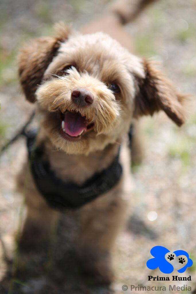 Prima Hund – hunddagis & daglig verksamhet i Borås